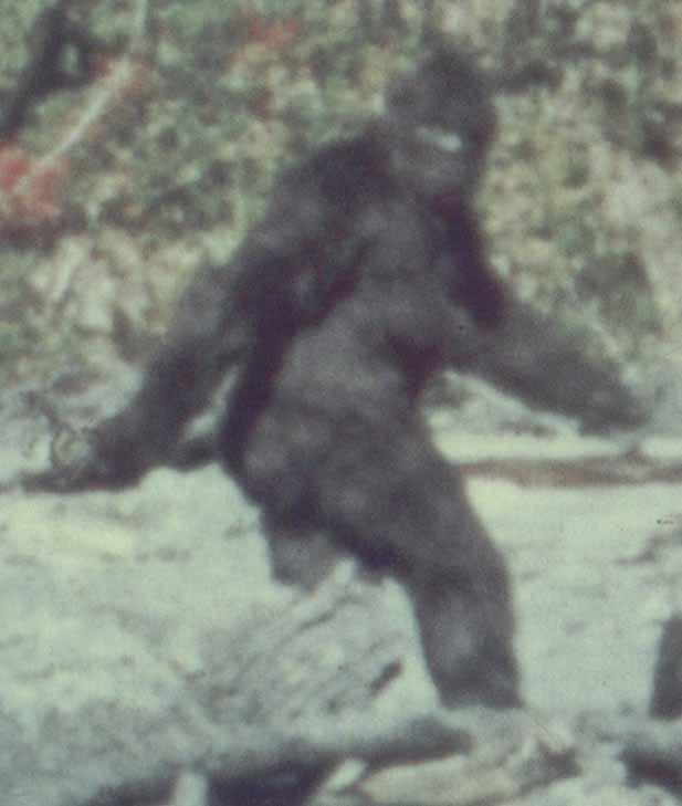 The ever-elusive Bigfoot.