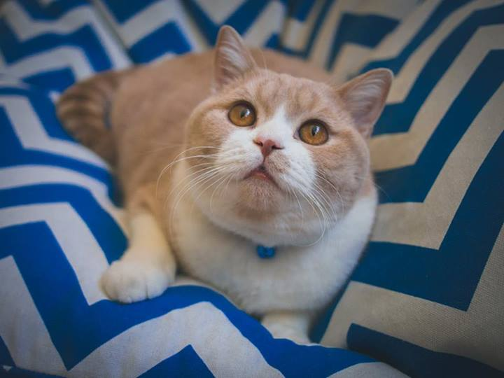 I didn't have a picture to go with this post, so here is a picture of a cat. Photo by Melissa Mai