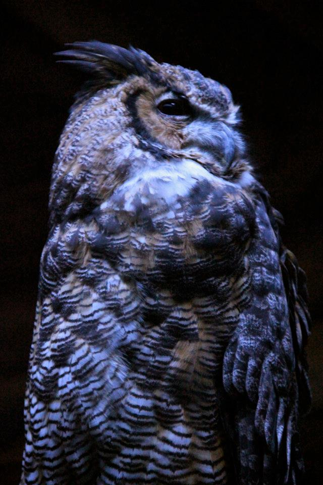 Owl at OKC Zoo- Photo by Helen Grant